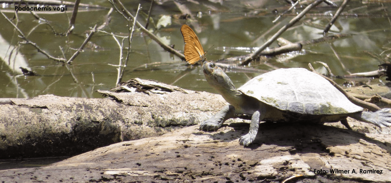 las-tortugas-no-son-mascotas-fundación-tourtugas.png