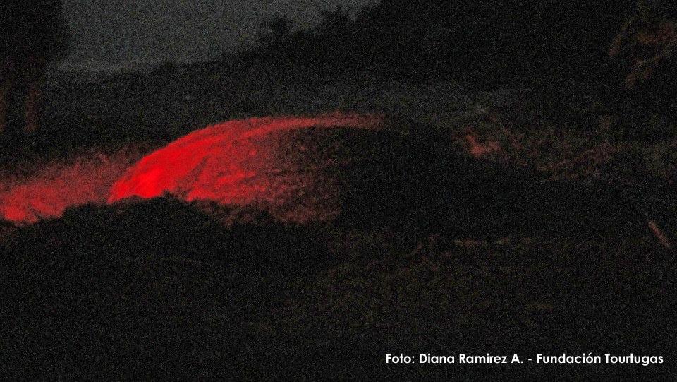 Tortuga Marina Laud anidando en la madrugada en Acandí departamento del Chocó. Con una pequeña luz roja por el lado posterior de la tortuga.