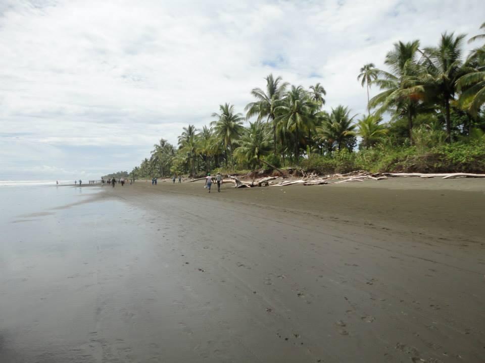 Foto de la playa La Cuevita durante la marea baja. Se aprecia la arena humeda y el borde de la selva, hasta donde llega el mar cuando sube la marea. Hay algunas personas caminando en la playa.