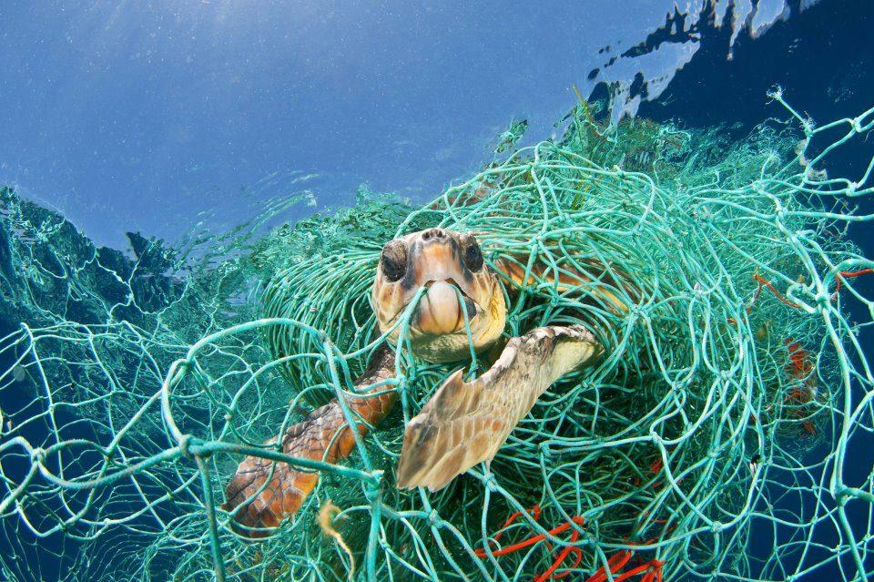 Tortuga-marina-atrapada-en-una-red-de-pesca-abandonada.jpg
