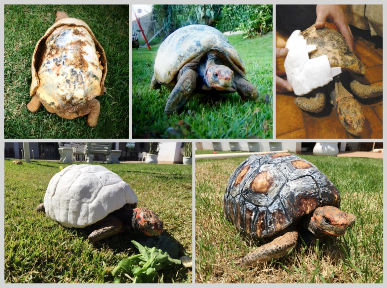 Tortugacaparazón-impreso-en-3D2.jpg