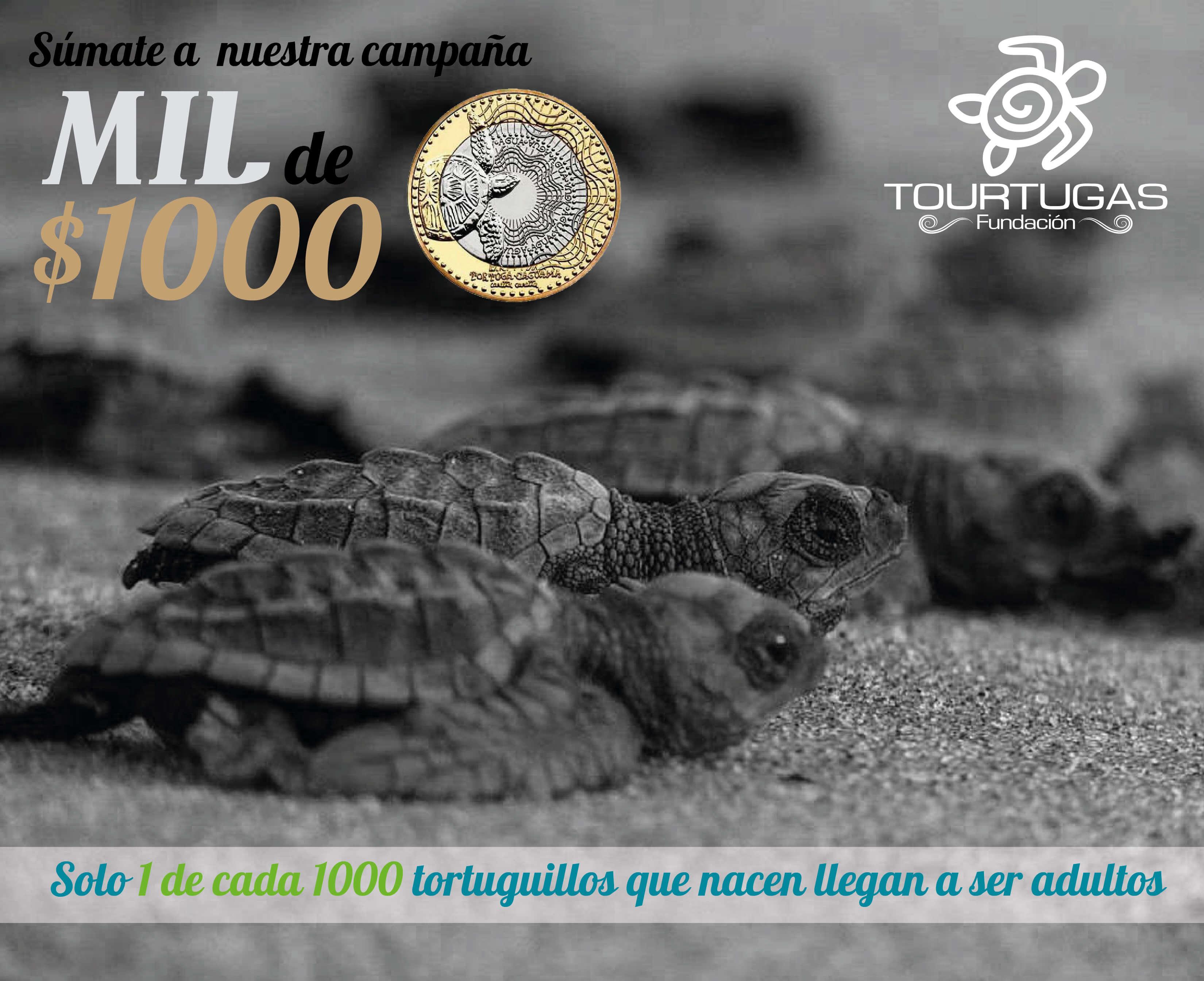 Foto en blanco y negro de tortugillos en la playa, con el nombre de la campaña, una moneda de mil por el lado que muestra la tortuga marina y la frase solo 1 de cada mil tortuguillos que nacen llega a ser adulto.