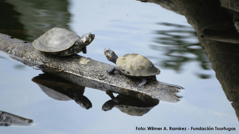 col-pais-de-tortugas-fundacion-tourtugas.png