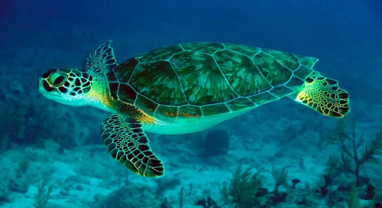 habitat-tortugas-marinas.jpg