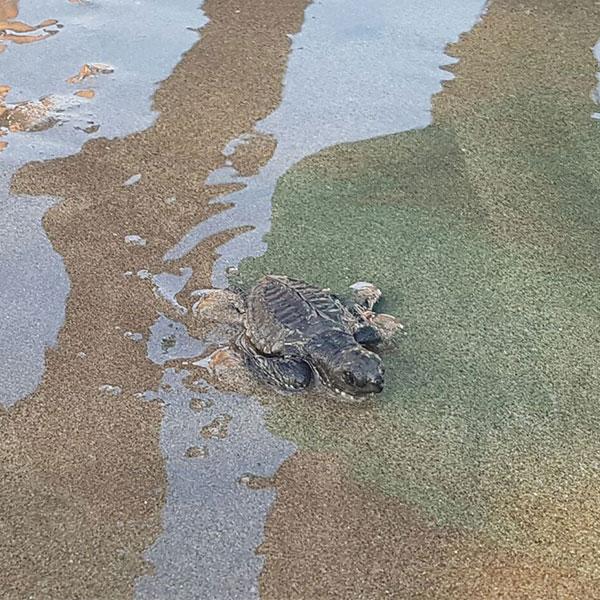tortugas-Acapulco.jpg