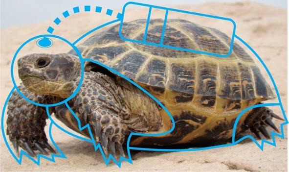 La-olvidada-historia-de-las-tortugas-que-viajaron-a-la-Luna.jpg