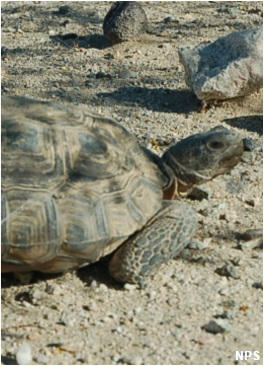 Las-poderosas-Tortugas-que-replegaron-a-los-marines-de-USA2.jpg