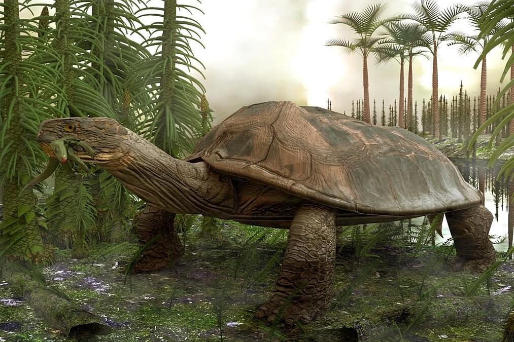 Ilustración reconstructiva de una tortuga extinta: Carbonemys Cofrinii. hallada en la Guajira colombiana