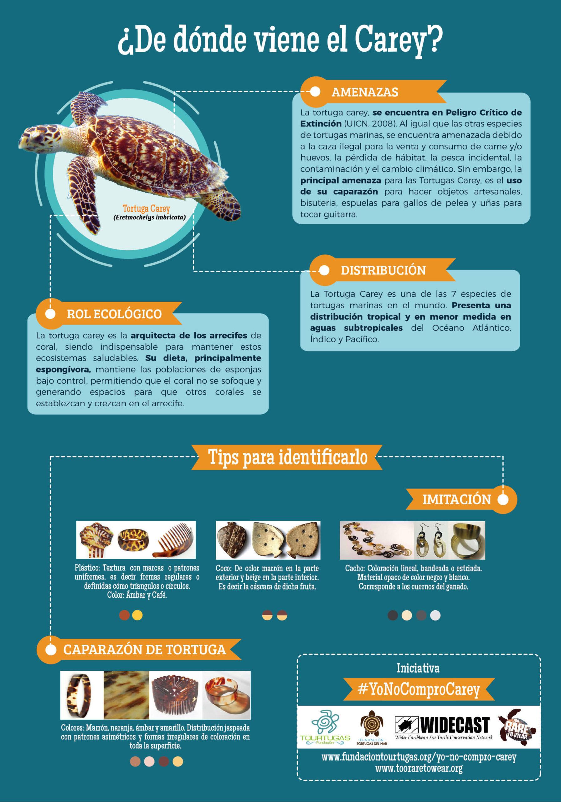Infografía del orígen de carey:
