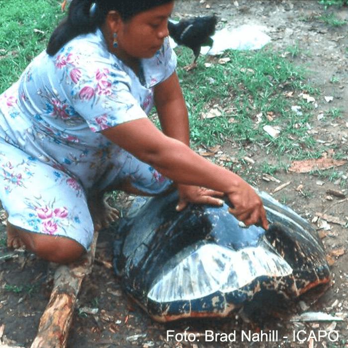 extraccion-de-escudos-del-caparazon-tortuga-carey.png