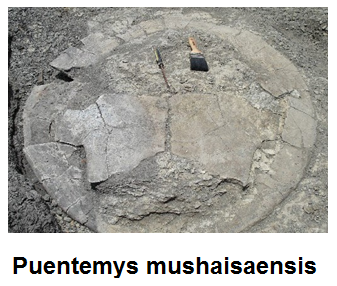 fosil_puentemys_-mushaisaensis.png