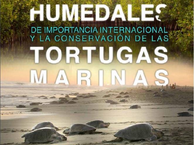 Humedales-y-tortugas-marinas.jpg