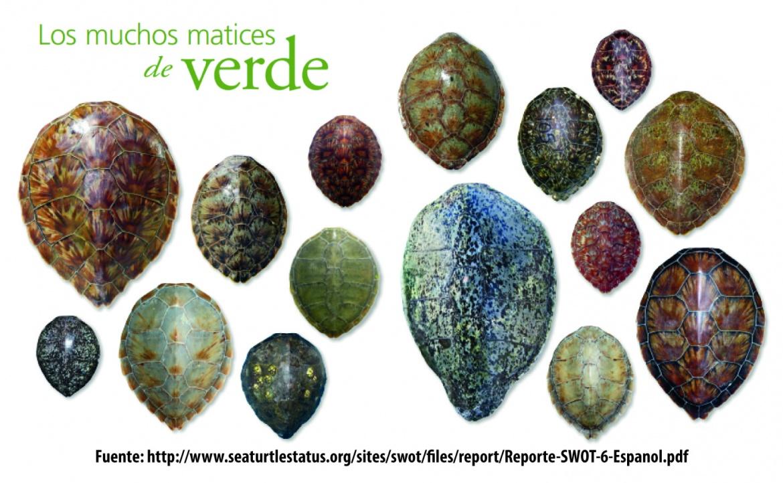 matices_caparazon_tortuga_verde.jpg