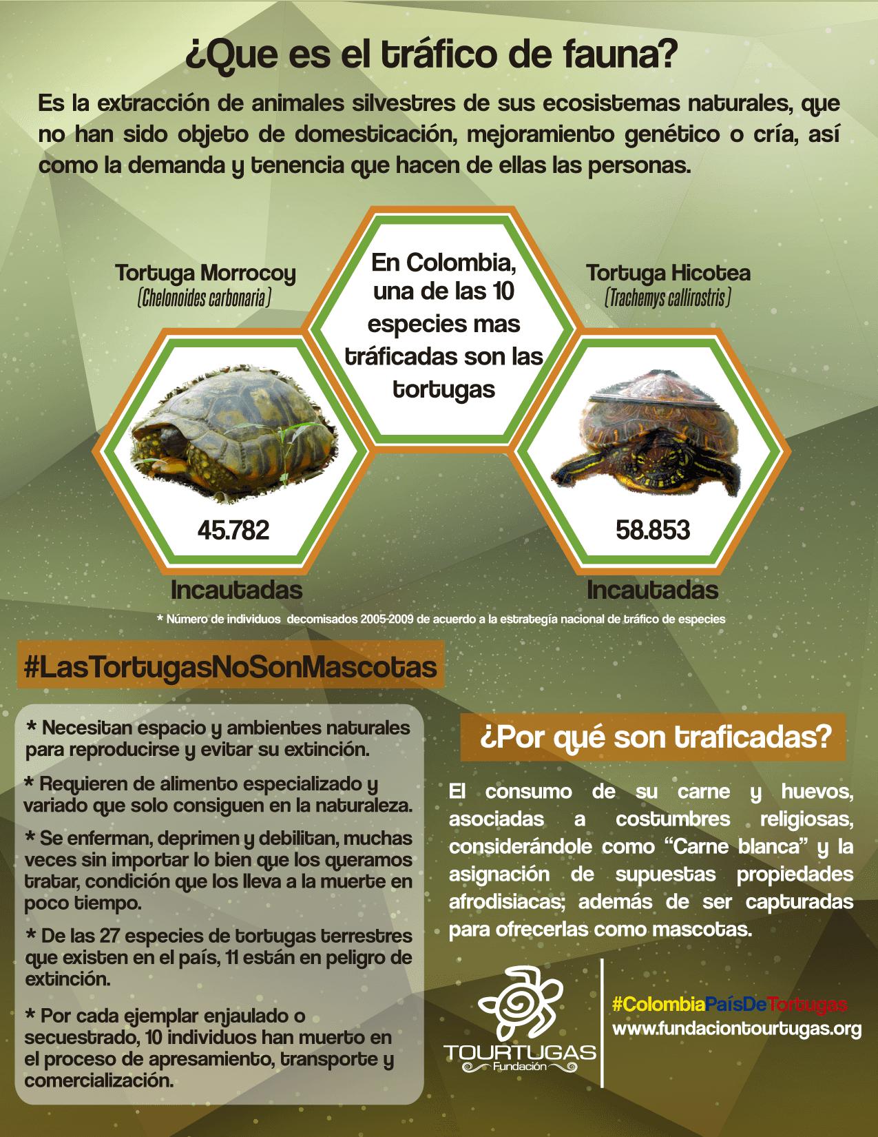 Infografía sobre el tráfico de tortugas continentales