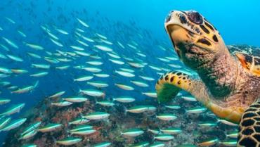¿Por qué son importantes las tortugas marinas?