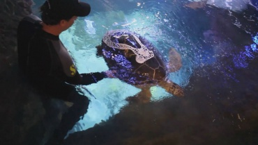 seemore-tortuga-marina.jpg