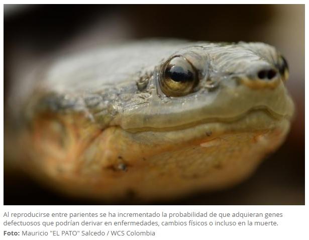 Colombia tiene nueva reserva para la conservación de tortuga en peligro de extinción