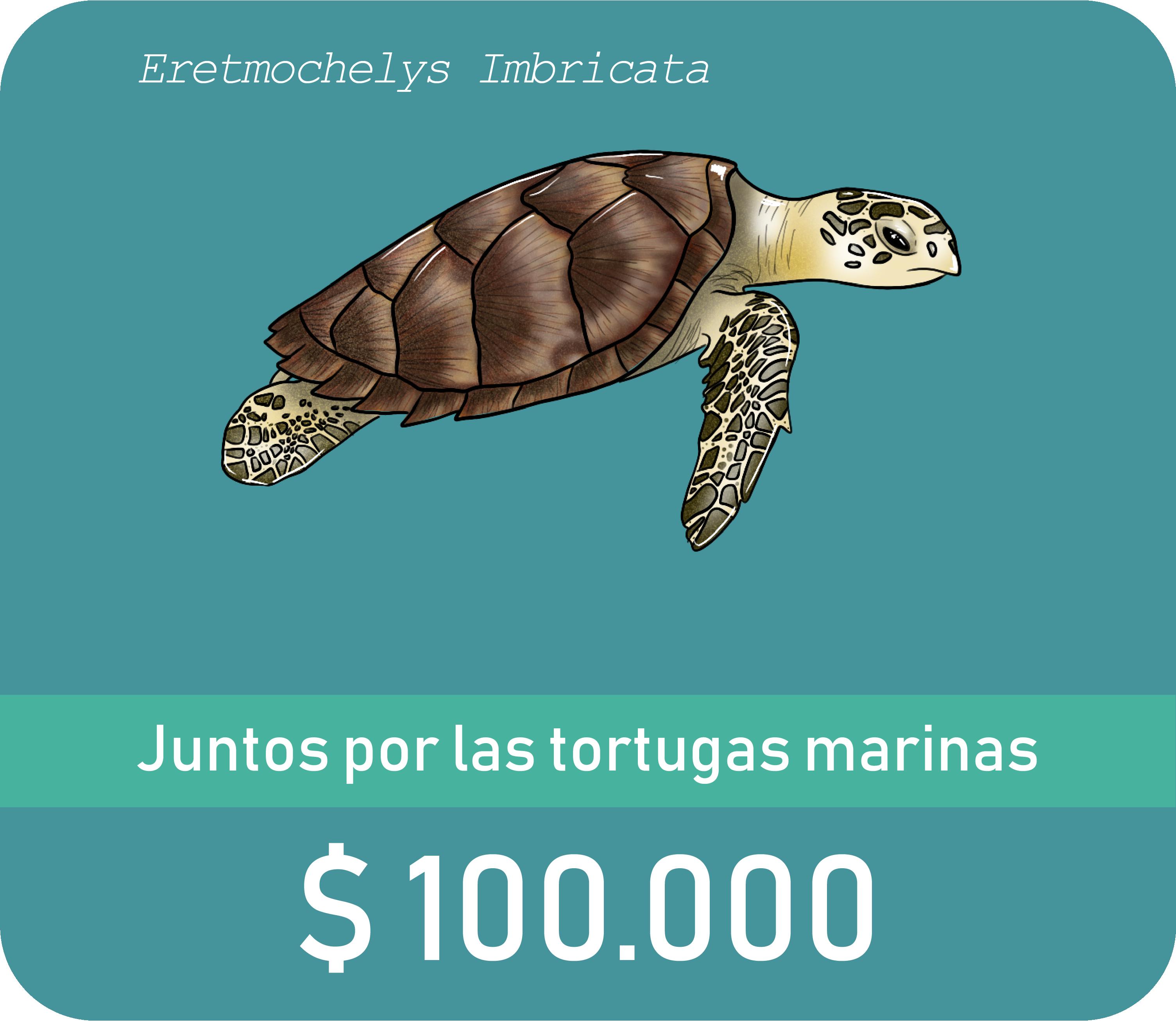Botòn de donaciòn de $100.000 con ilustraciòn de una tortuga carey