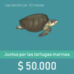 Botòn de donaciòn de $50.000 con ilustraciòn de una tortuga golfina