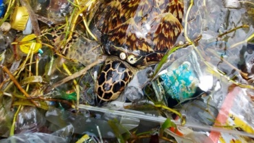tortuga-marina-nadando-basura.jpg